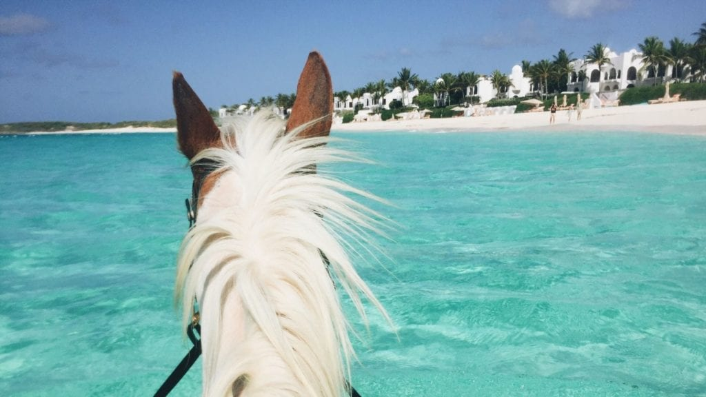 Swimming with horses in Anguilla (Photo: @leggybird via Twenty20)