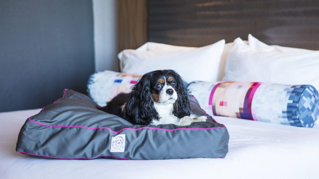 Dog on bed at Aloft Hotels, a dog-friendly hotel chain