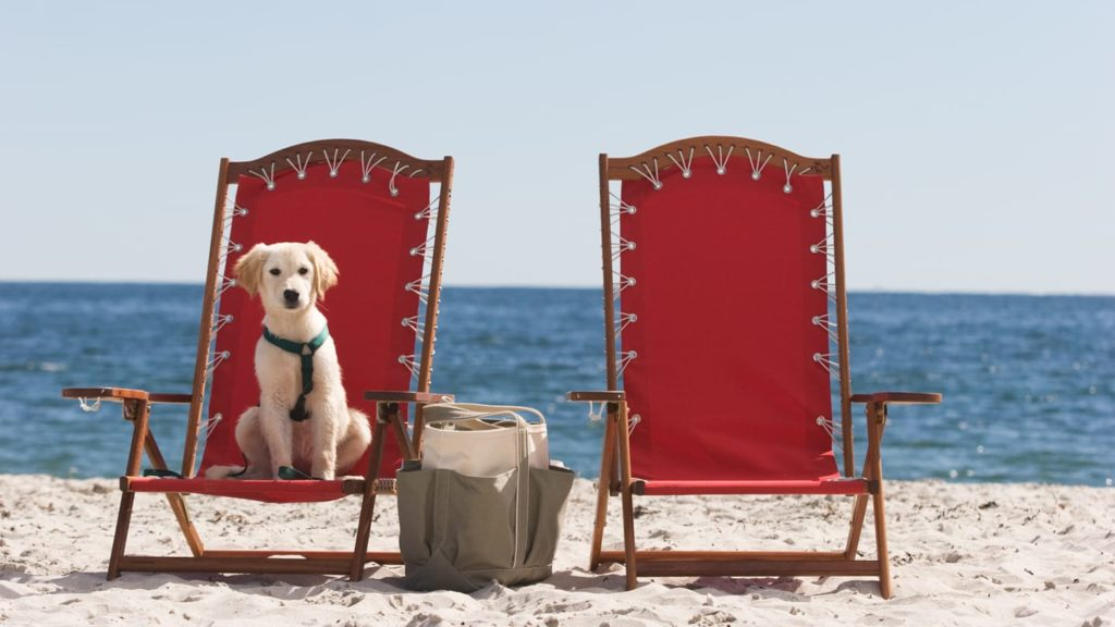 Puppy sitting in a chair at the beach at the Inn by the Sea, a dog-friendly hotel