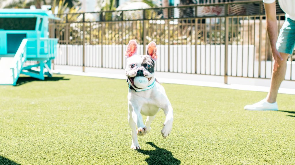 Dog playing fetch at the Pasea Hotel and Spa, a dog-friendly hotel
