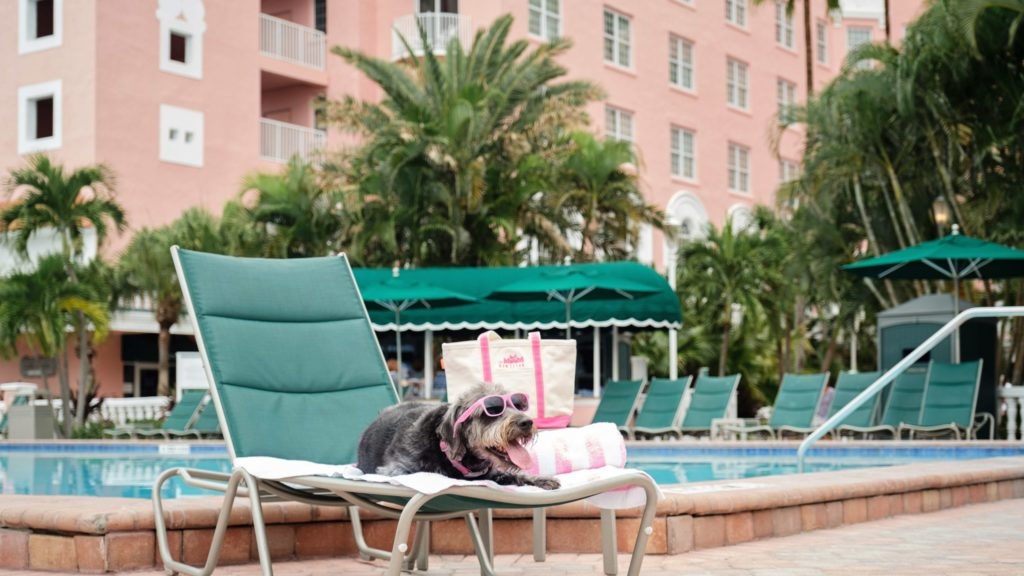 Dog on a lounge chair at the Don CeSar, a dog-friendly hotel