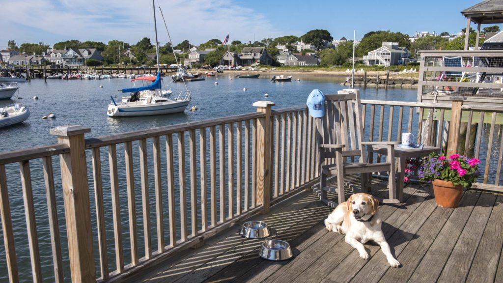 dog lounging on deck over water at Woof Cottages, a dog-friendly hotel
