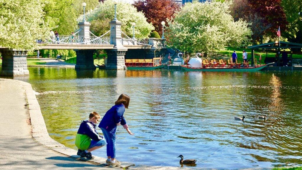 children feeding ducks near the swan boats in Boston
