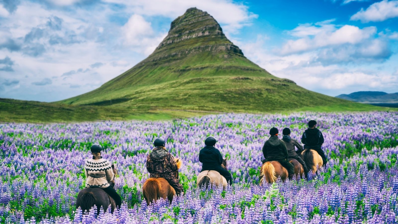 Tourists riding horses through wildflower meadow in Iceland (Photo: Shutterstock)