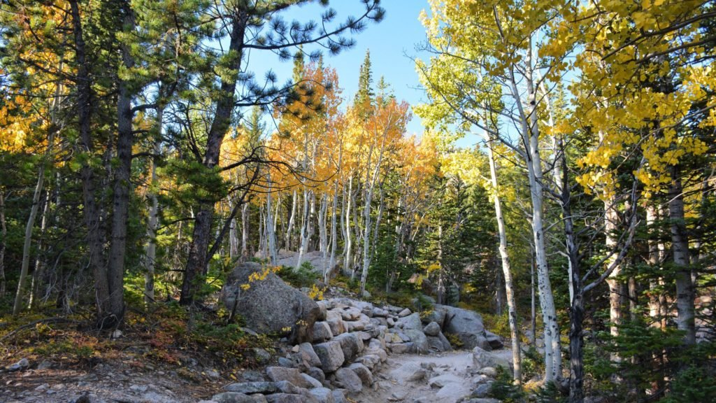 Fall aspens on display in Rocky Mountain National Park (fall vacation ideas)